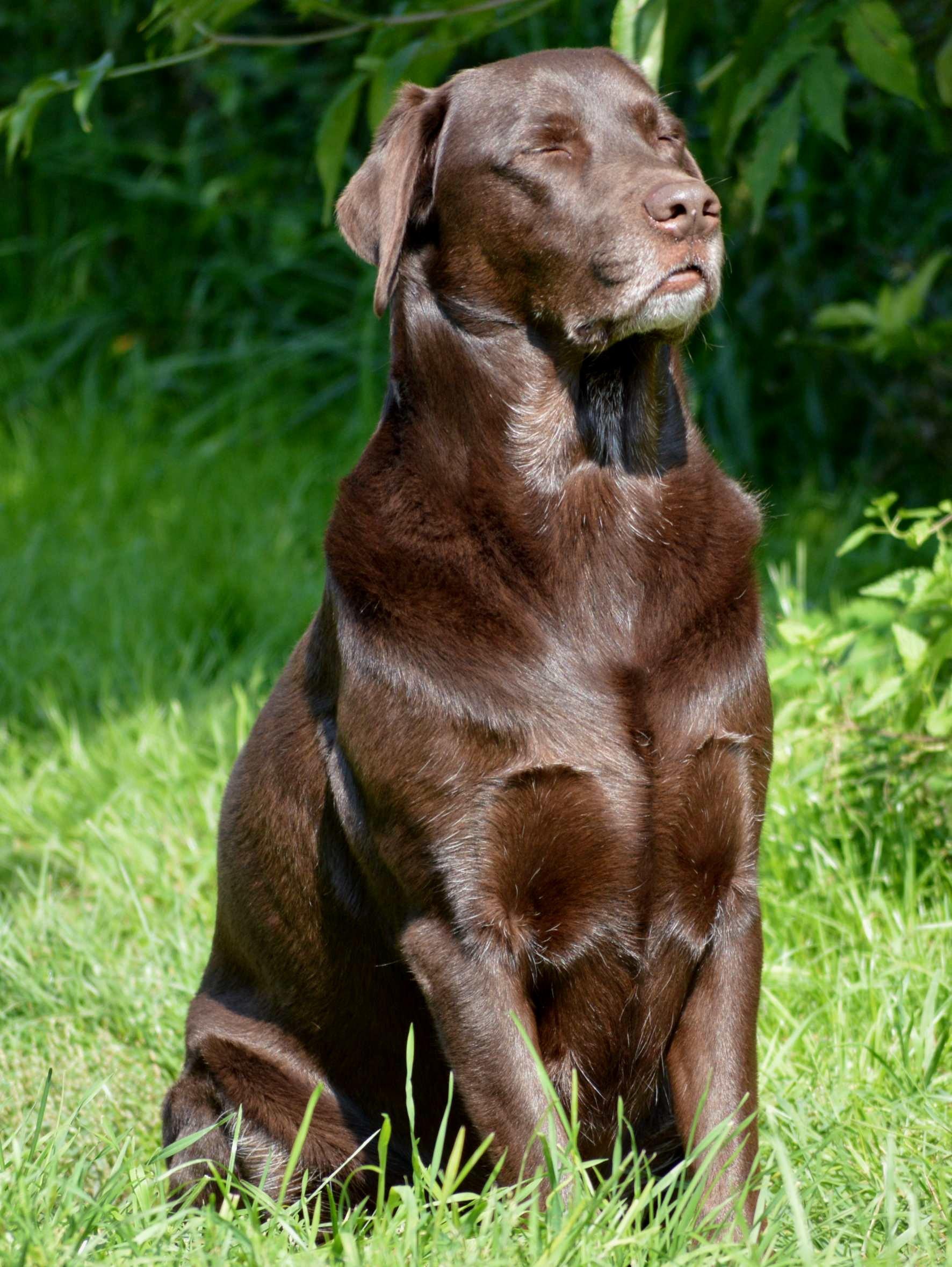 freiwilliger Hundeführschein