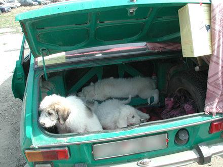 Der illegale Tierhandel hat sich vom Kofferraum ins Internet verlagert. - Bildquelle: Vier Pfoten