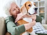 Tiere sind keine Beschäftigungstherapie - Bild: © Seventyfour - stock.adobe.com