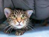 Hund und Katze bei Gewitter nicht alleine lassen - Bild: © Mary Swift Photography/stock.adobe.com