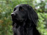 Kostenloser Vorbereitungskurs für den Freiwilligen Wiener Hundeführschein - Bild: © Brigitta Pertschy