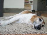 Wie kann man alten Hunden das Leben im Haushalt erleichtern?
