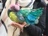 Gefärbte Taube als Touristenattraktion für Selfies angeboten - Bild: © VIER PFOTEN|Privat
