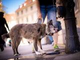 5 Tipps für Sommertage mit Hund in Wien - Bild: © TOW|Houdek