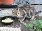 Katzenkastration verhindert Tierleid - Bild: © TOW