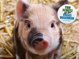 Startschuss für Tierschutzvolksbegehren