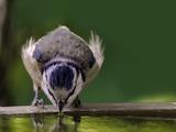 So überstehen Vogel, Katze und Co. die heißen Sommertage - Bild: © TOW