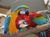 Neu: Leitfaden für die Papageienhaltung - Bild: © ARGE PAPAGEIENSCHUTZ