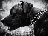 TOW warnt vor Tierqual-Halsbändern aus dem Internet - Bild: ©TOW|pixabay